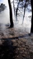 Kastamonu'daki orman yangınları kontrol altına alındı