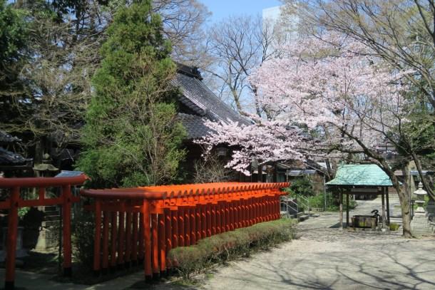 春には桜が咲き誇る境内