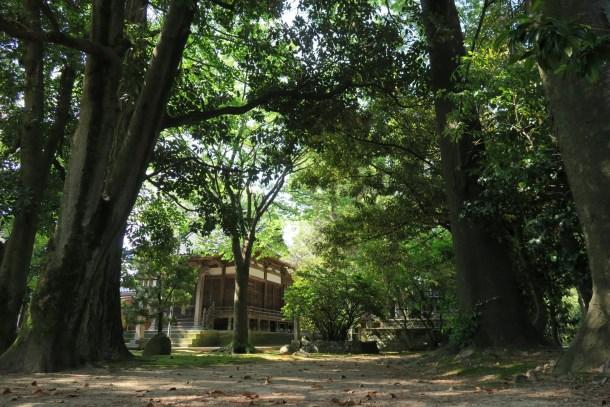境内の木々に佇む宇佐八幡神社拝殿