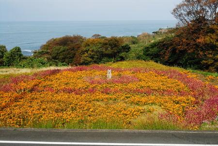 丹後半島の花