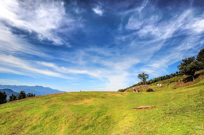 清境之美 | 青青草原 綻放北歐風光