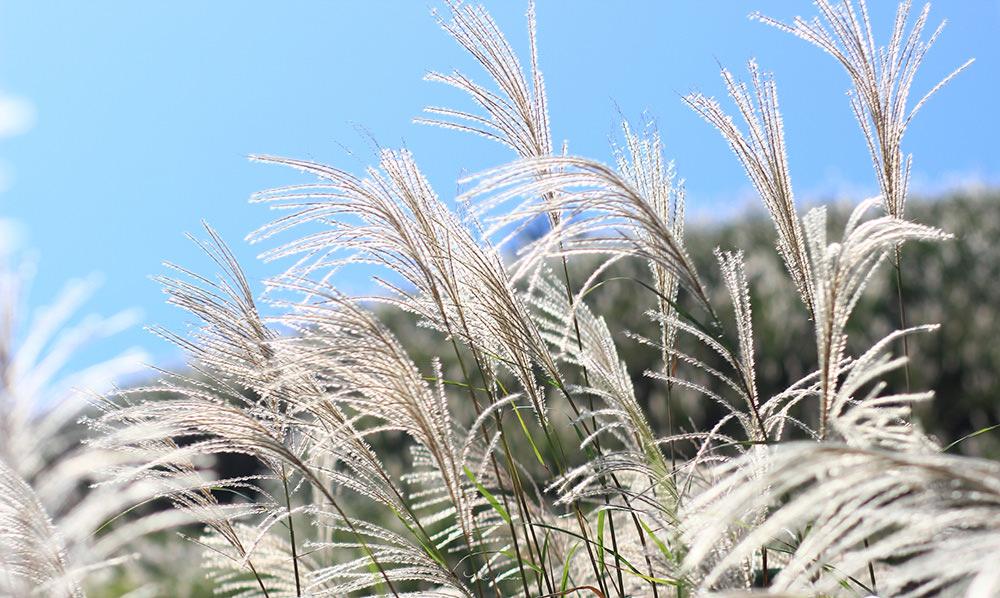 週末好去處   秋季限定 銀白浪花