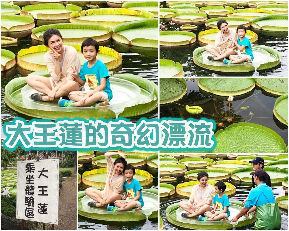 藏身雙溪公園的 大王蓮奇幻漂流    同場加映 新兒童樂園嗨翻天