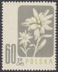 Kwiaty chronione - 878
