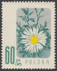 Kwiaty chronione - 880