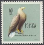 Ptaki chronione w Polsce - 1067