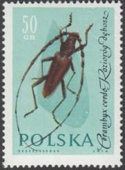 Owady chronione - 1135