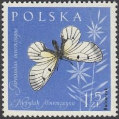 Owady chronione - 1138