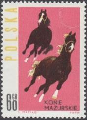 Konie polskie - 1303