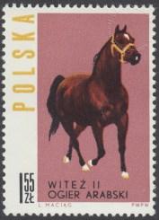 Konie polskie - 1305