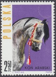 Konie polskie - 1306
