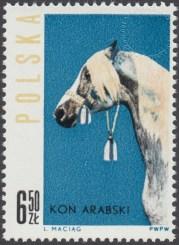 Konie polskie - 1308