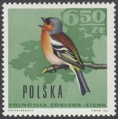 Ptaki leśne - 1577