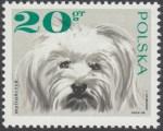 Rasy psów - 1751