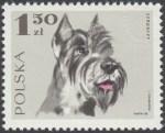Rasy psów - 1754