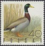 Ptaki łowne - 1841