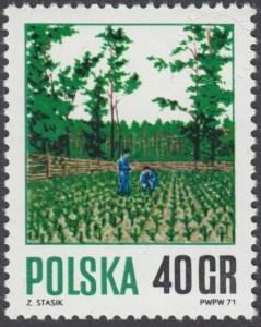 Gospodarka leśna - 1920