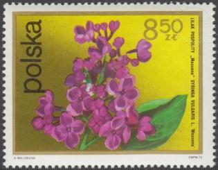 Kwiaty krzewów - 2074