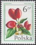 Owoce leśne - 2346