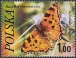 Motyle - 2370