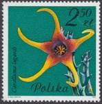 Kwiaty sukulentów - kaktusy - 2640