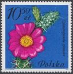 Kwiaty sukulentów - kaktusy - 2643