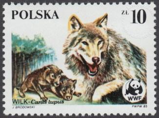 Dzikie zwierzęta chronione - wilk - 2828
