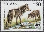 Dzikie zwierzęta chronione - wilk - 2830
