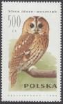 Sowy - 3147