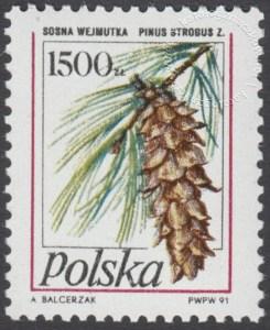 Owoce drzew iglastych - 3165