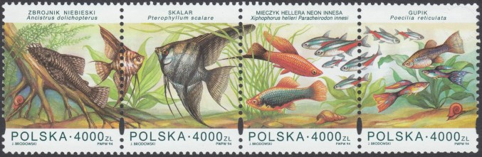 Ryby akwariowe - zn3357-3360
