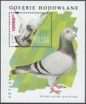 Gołębie hodowlane - Blok 112
