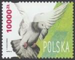 Gołębie hodowlane - 3367