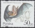 Ochrona przyrody - nietoperze - 3508