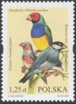 Egzotyczne ptaki hodowlane - 3970