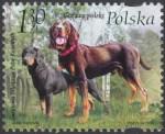 Światowa Wystawa Psów Rasowych 2006 w Poznaniu - 4127