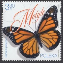 Motyle - 5089