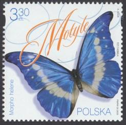 Motyle - 5091