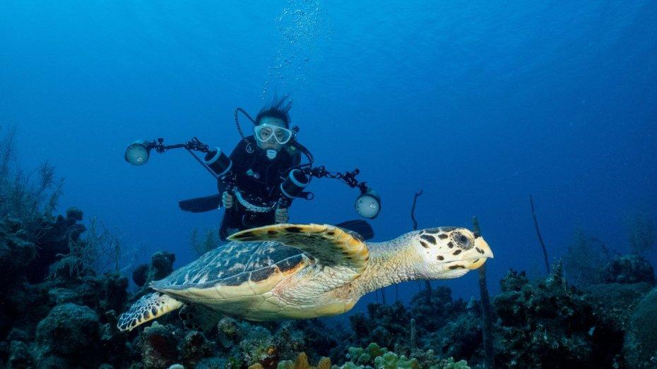 turtle-diver_1400x