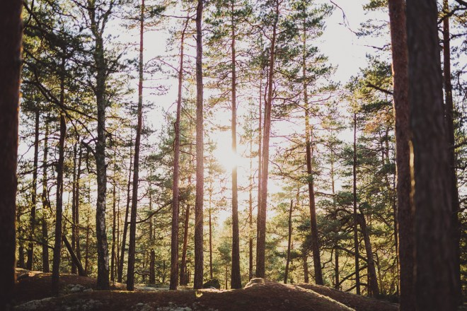 tivedens_nationalpark-21