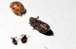 A few beetles