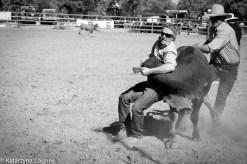 Calf wrestle