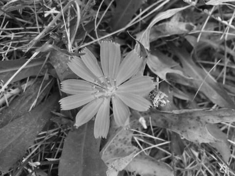 bw-flower-1