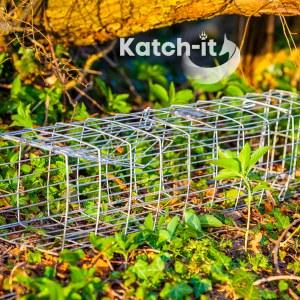 squirrel trap by katchit