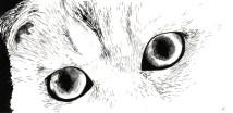 Cat Study 1