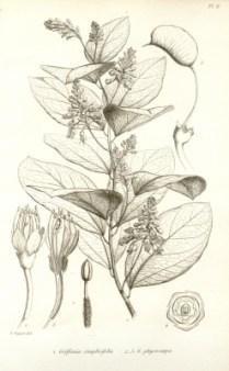 griffonia katebeautycase