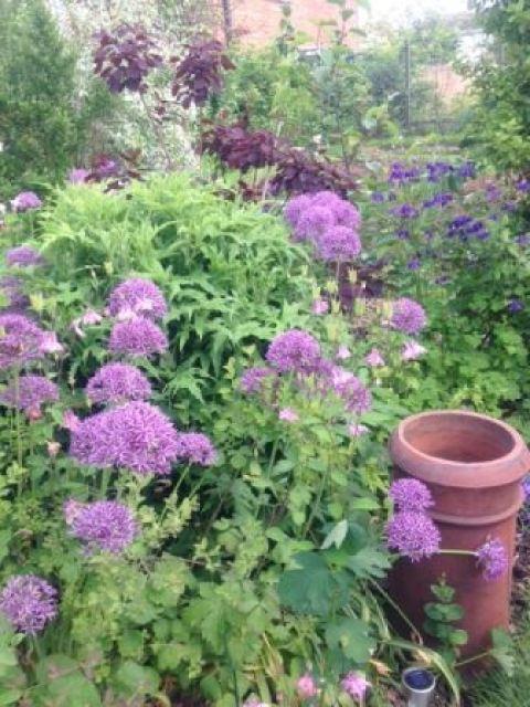 vintage garden aliums Kate Beavis Vintage Home blog