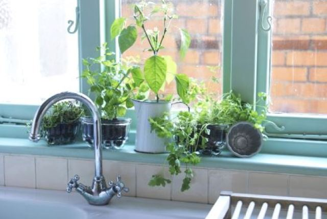 Vintage jelly moulds as planters photo by Simon Whitmore for Style Your Modern Vintage Home by Kate Beavis