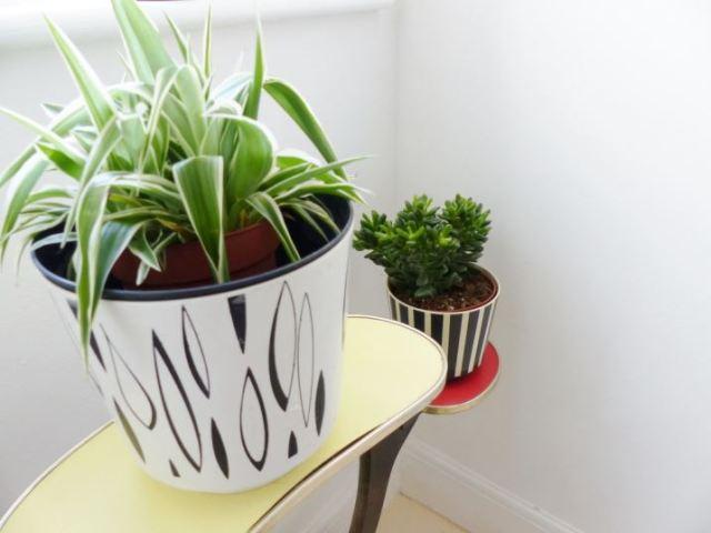Succulent plants in Dialene Better Maid plant pots by Kate Beavis Vintage Home