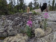 Land and Heart Yoga Teacher Training Prelude Nature Trail Yellowknife Dogs